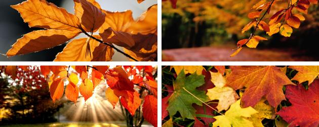 autunno_bannerWeb